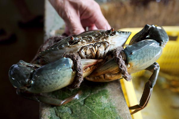 How to Choose Good Meaty Crabs: A Tutorial - ieatishootipost
