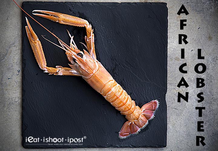 African-Lobster