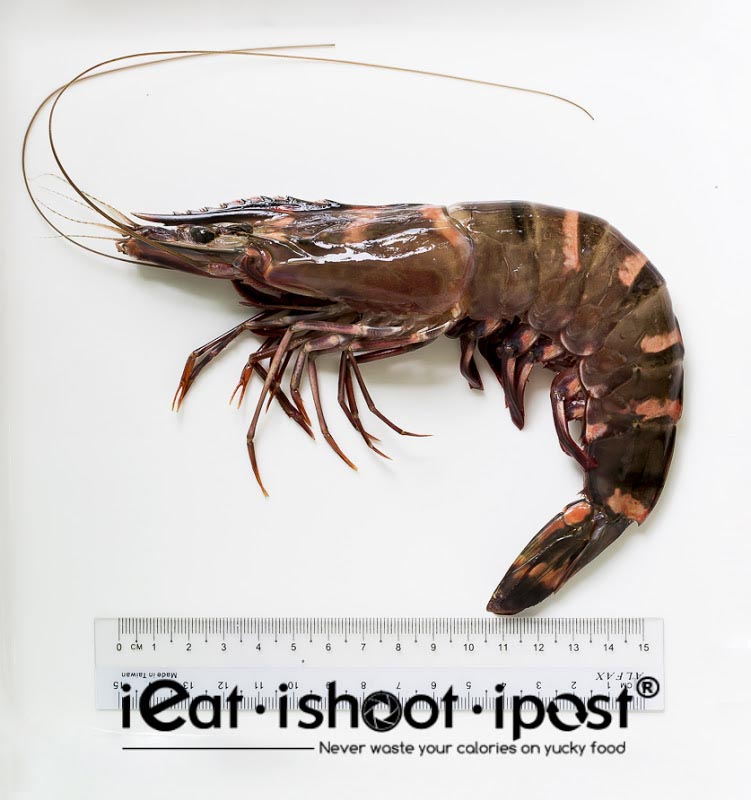 Giant Tiger Prawn - Rusty Brown colour - Wild caught