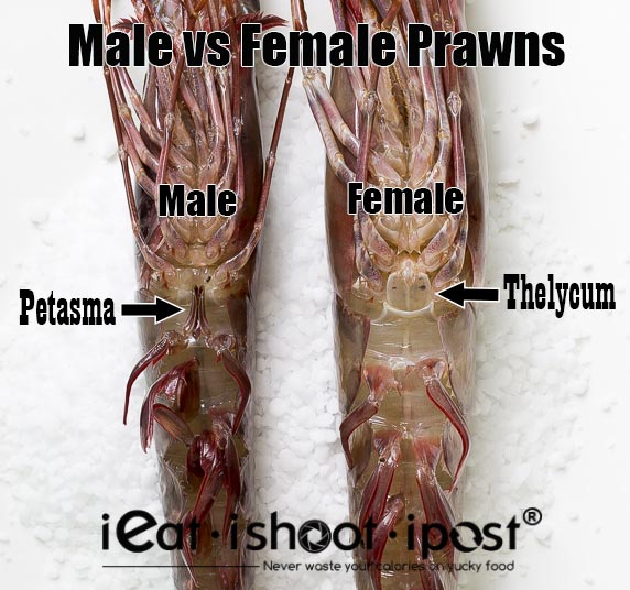 Sexual organs of the Giant Tiger Prawn
