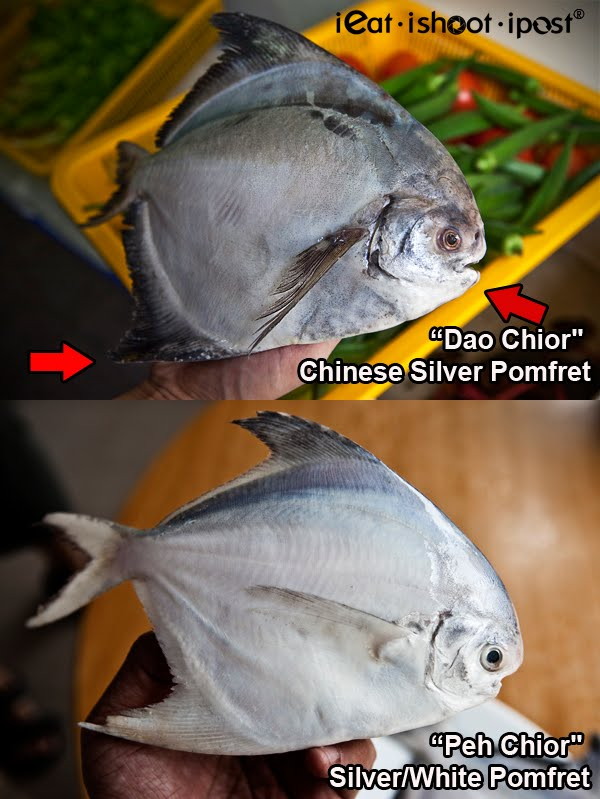 Differences-Pomfret